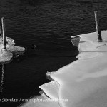 Black-on-white---Wdr-38R7573-copy