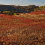 Blueberry-field-Pano-Wdr-1377-22--x-7-in-actual-size
