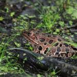 Bullfrog-Wdr-1153_MG_8299