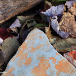 Fallen-Leaves---NS---Autumn-Wdr-1215_MG_8070