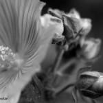 Garden-Flowers-Wdr-1154_MG_8850