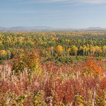 Mt-Carleton-area-Pano-22-x-5-8-in-actual-size-Sdr-1057