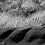 Of-grasses-and-sandstone--Wdr-1216_MG_8825