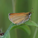 Skipper-NB---Wdr-1258-MG_2788