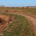 Tantramar-Marsh---NB-22-11-2012-W-Pt--Wdr_MG_0447