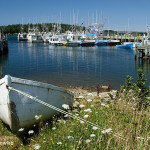 Wedgeport-NS---Boats-in-Harbour---Wdr-G--SCN-02---597---1---14786
