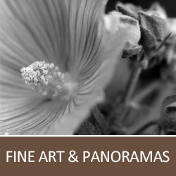 Galleries - Fine Arts and Panoramas